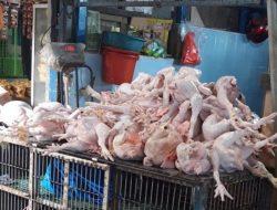 Harga Ayam Melonjak 2 Kali Lipat, Pedagang di Pasar Tamalate Keluhkan Omset