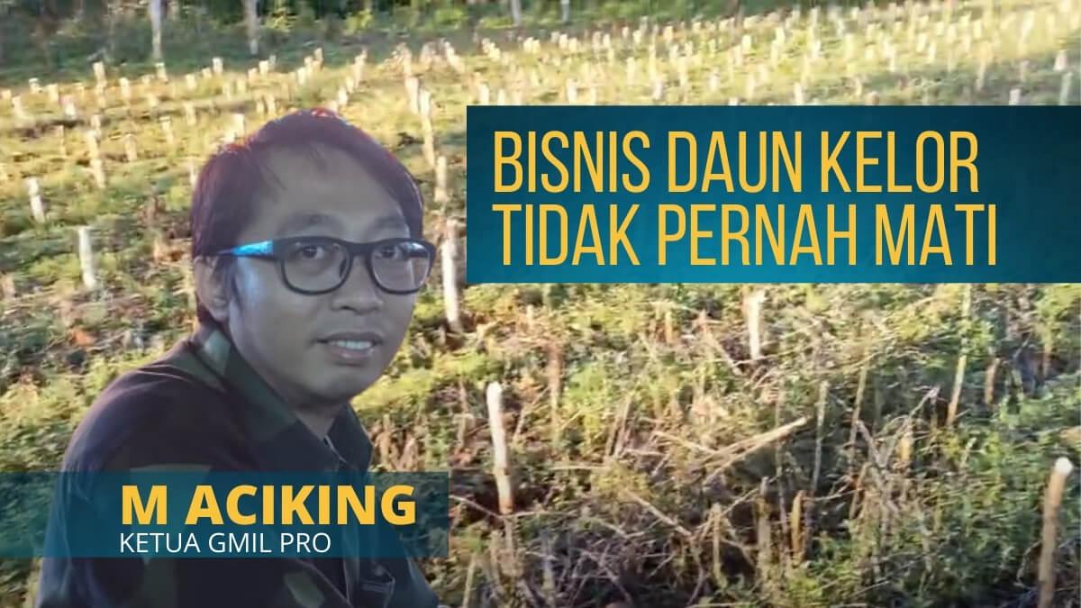 bisnis daun kelor - petani kelor di Bulukumba M aciking (1)